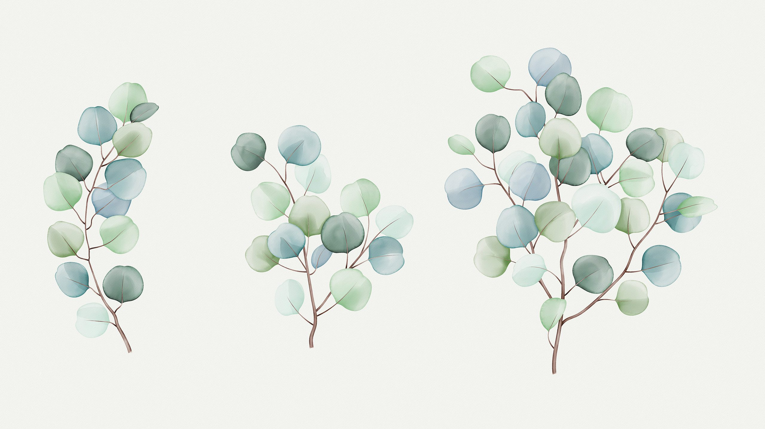 eucalyptus watercolour illustration